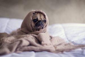 alimentos que dificultan el sueño